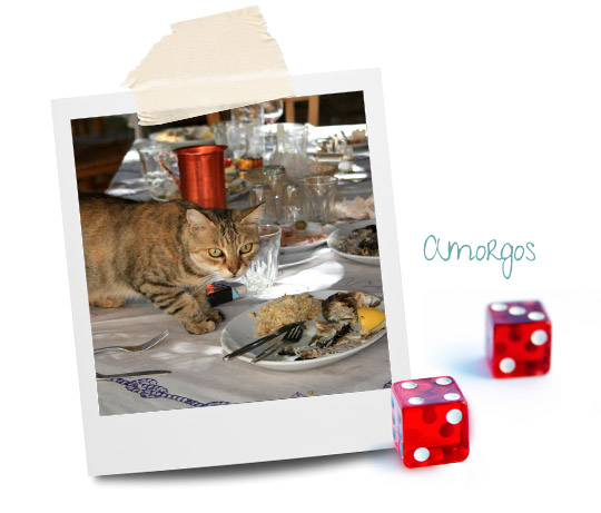 Amorgos cats