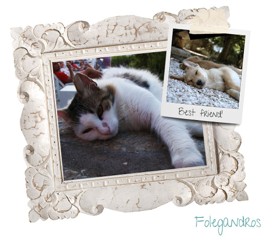 folegandros cats