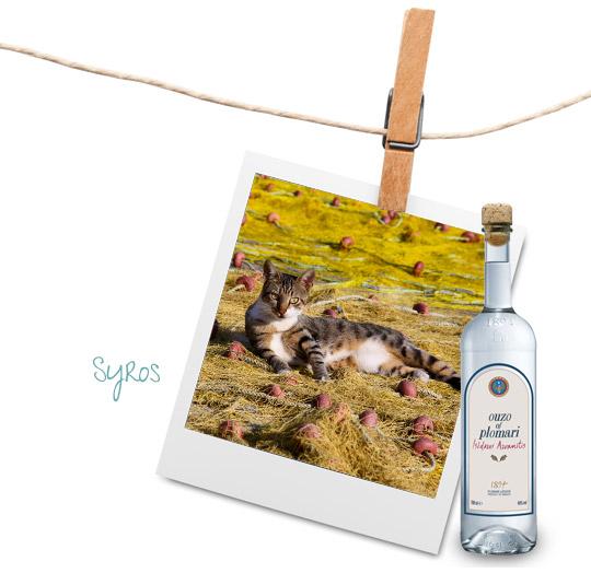 Syros cats