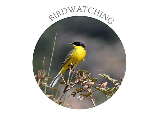 evia birdwatching