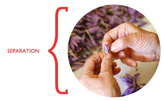 saffron_seperation