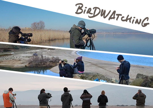 birdwatching in Greece