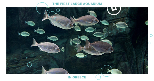 greece aquariums