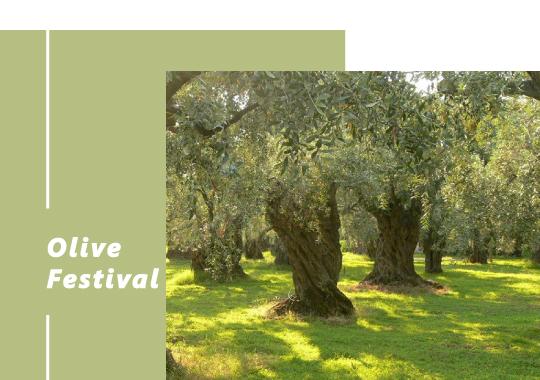 04.Olive_Festival